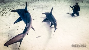 Steph and Hammerheads